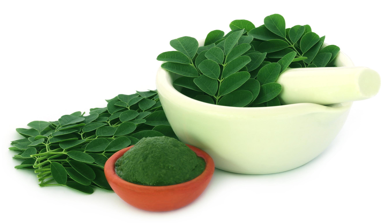 Moringa Gut Health